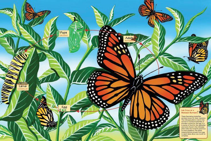 diy monarch butterfly house Google Search Monarch