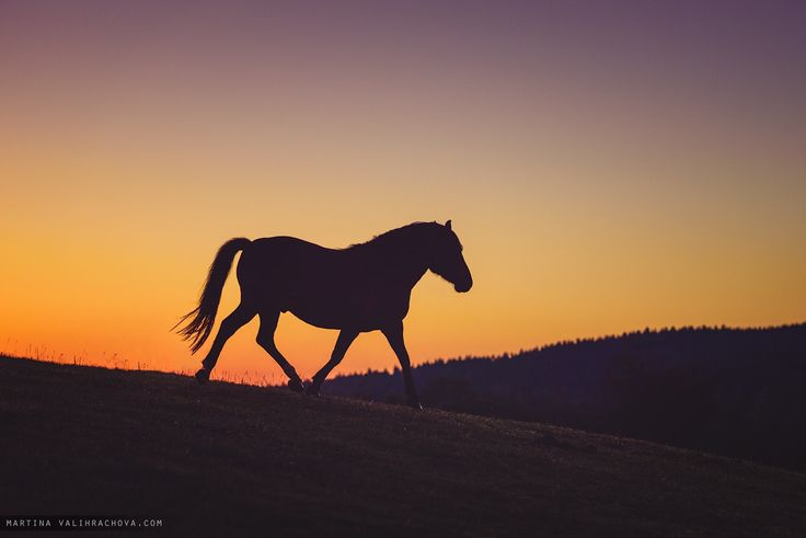 Morning - Horse in meadow with orange sunny sky early in the morning.