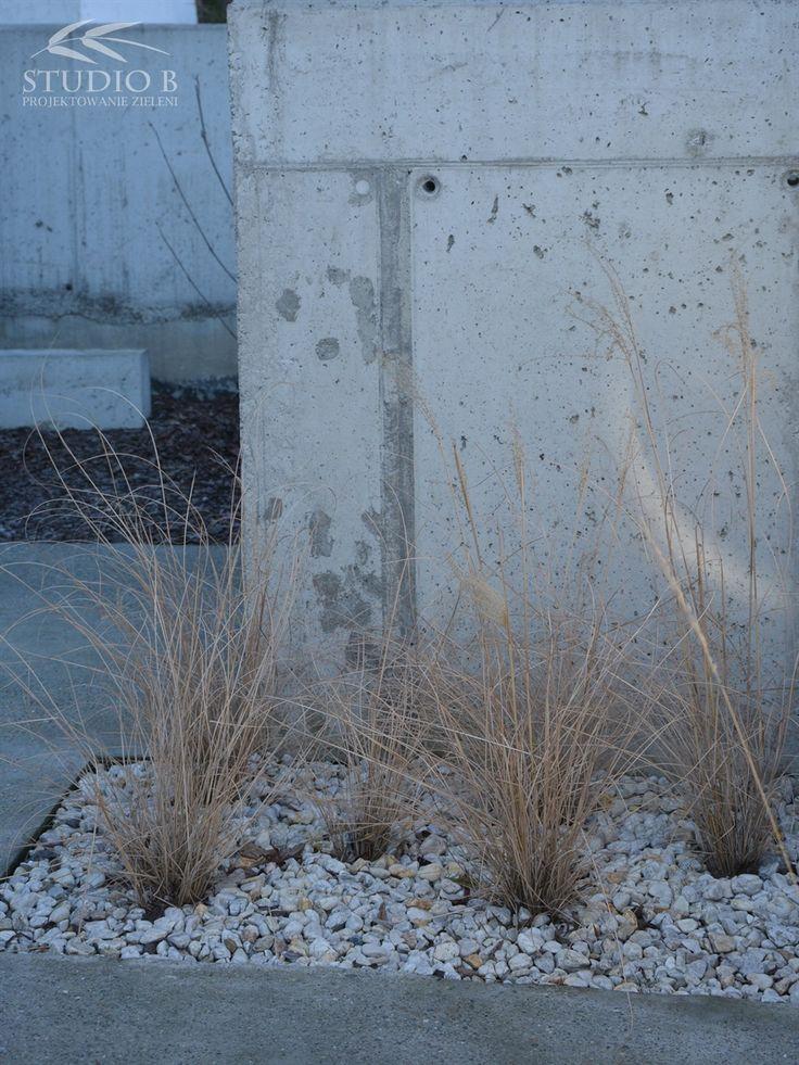 Winter_Miscanthus sinensis 'gracillimus'   Studio B