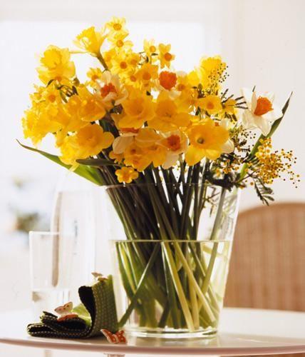 Dieser Frühlingsstrauß beweist: Narzissen und Mimosen versprühen strahlend gute Laune.