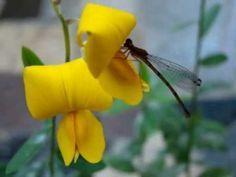 Flores eficientes no combate à dengue são plantadas em canteiros