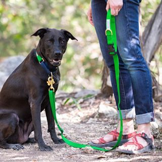 Quality dog collars, leashes, and accessories made in Austin, Texas.