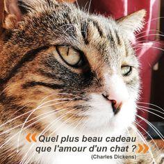 Citation chat Quel plus beau cadeau que l'amour d'un chat ?