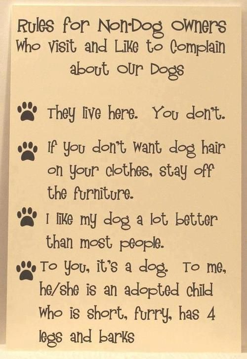 "Rules For Non-Dog owners. I don't have dogs, but I do have cats and it still applies - especially the one about ""they live here, you don't."""