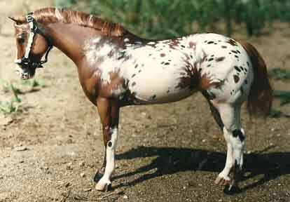 Love the coloring!, This is a custom painted Breyer Model Horse!