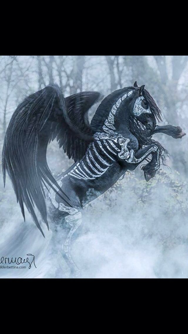 Black Pegasus...  Horse costume ...                                                                                                                                                                                 Mehr