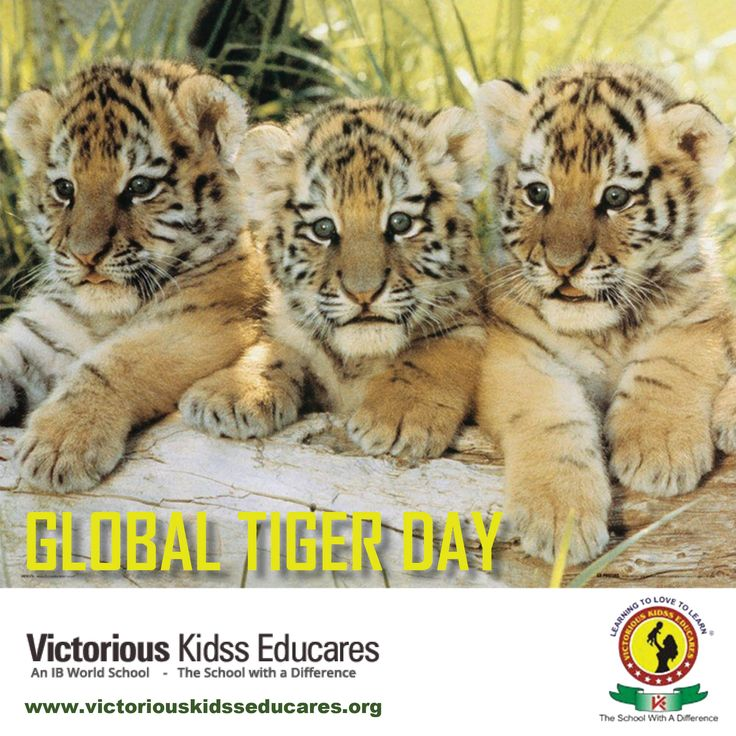 #InternationalTigerDay! Let Your #Children See The #Tigers, Don't Let Them Be A Part Of #History!!