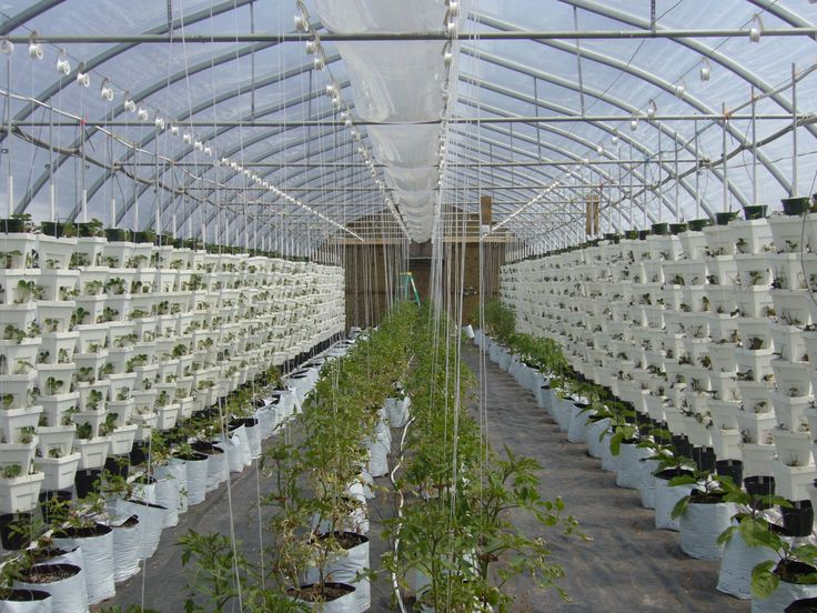 Hydroponic Greenhouse Operation