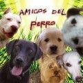 Para todos aquellos amantes de los perros    Protectoras de Animales son Bienvenidas!!!