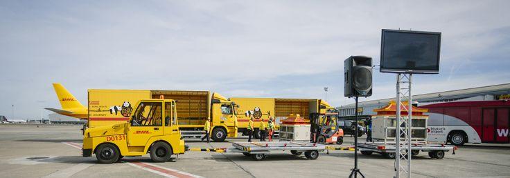DHL transporta dos pandas gigantes desde China a Bélgica http://www.avancecomunicacion.com/sala-prensa/dhl-transporta-dos-pandas-gigantes-desde-china-belgica/ #notadeprensa #logística