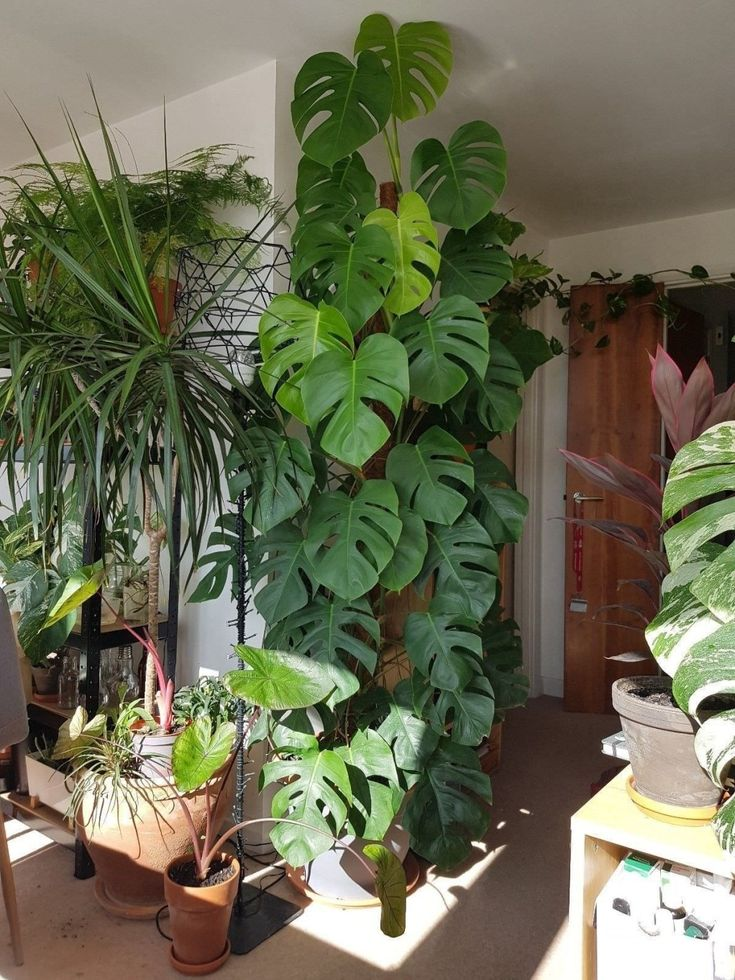 Lovely Indoor Plant Ideas34