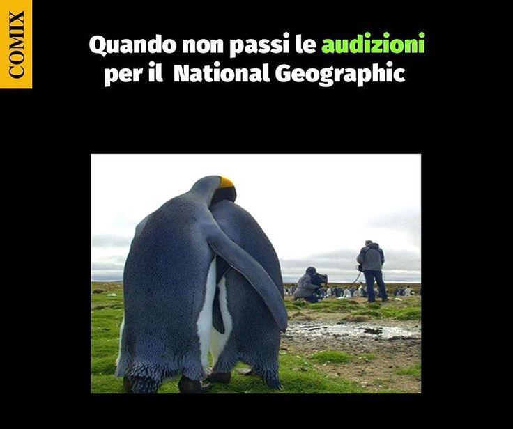 """Mi piace"": 8,058, commenti: 12 - Comix (@comixofficial) su Instagram: "" #paroladiComix #comix #audizioni #nationalgeographic #natura #pinguini #animali #documentario"""