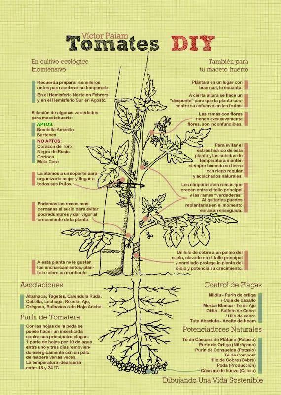 Tomateras-BioIntensivas-victorpaiam@gmail.com