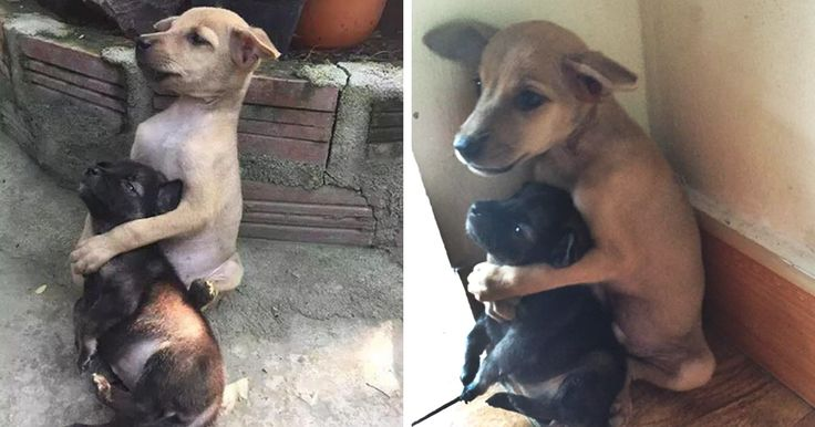 Stray Puppies Won't Stop Hugging Each Other Since They Were Rescued - http://www.villagevetanimalclinic.com/stray-puppies-wont-stop-hugging-each-other-since-they-were-rescued/