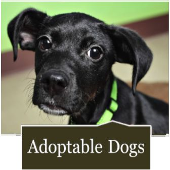 Furkids Small Dog Rescue in an amazing animal rescue organization in Atlanta. Adopt an animal - Save a life!
