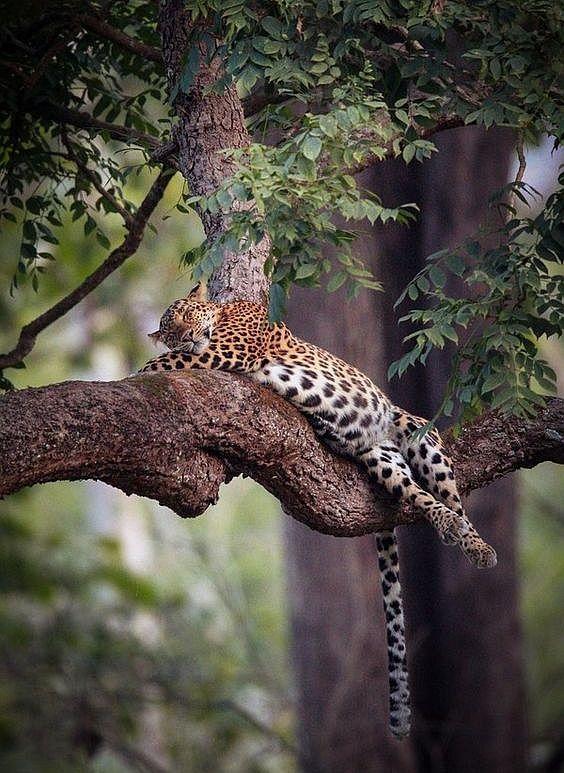 "beautiful-wildlife: ""Sleeping by © Vishwa Kiran """
