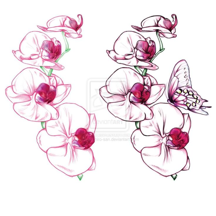 butterfly on orchid tattoos design wishlist pinterest orchid tattoo tattoo designs and tattoo. Black Bedroom Furniture Sets. Home Design Ideas