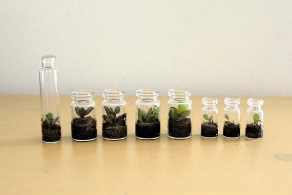 Tiny terrariums