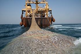 Weil viele europäische Fischbestände erschöpft sind, wirft die EU-Flotte ihre Netze in fremden Gewässern aus. Es gibt keine offizielle Statistik darüber, wie viele afrikanische Fischer zu Flüchtlingen oder Schleppern werden, weil EU-Trawler ihre Reviere vor der Küste leer gefangen haben. Die CFFA schätzt aber, dass ein Fünftel der afrikanischen Flüchtlinge Fischerei-Migranten sind.