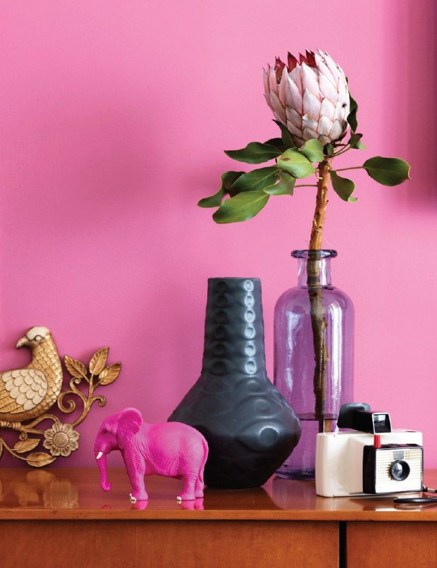 Everything about this is perfect. Pink wall color. Interesting decor. Vintage camera. Strange botanical pop. Perfection!