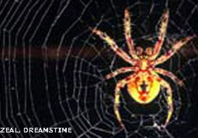 This spider's bite causes erection