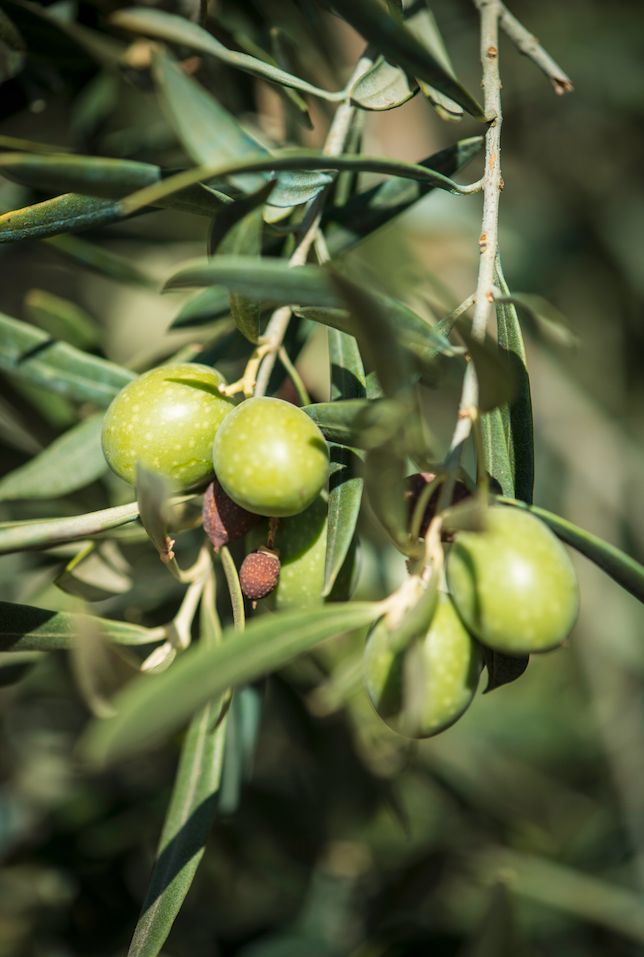 Pascale Naessens - Pure Olive oil