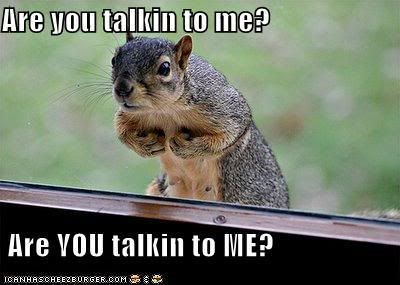 ='ᴥ'= Ꭿℓℓ Ʈђἶɲɠʂ ᎦqմᎥɽɽҽℓ ='ᴥ'= ~ Are You Talkin To ME? - squirrel