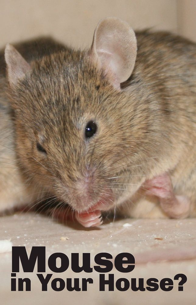 Simple Mouse Halloween Costume: 10 Simple Tips To Prevent Mice And Rodents Inside The Home