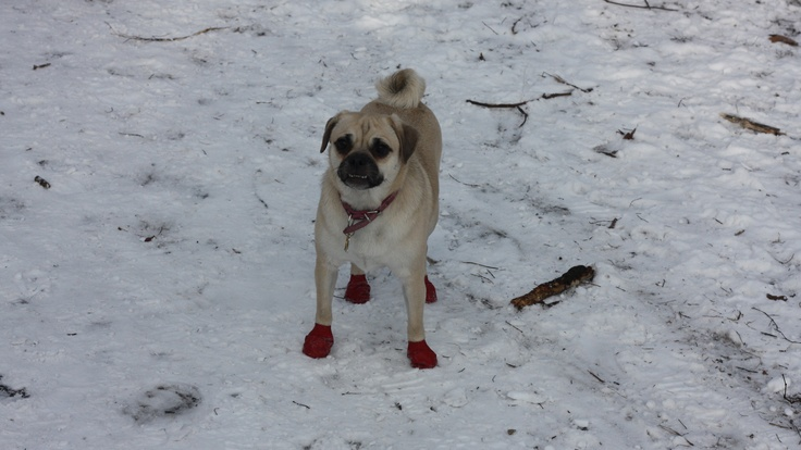 Dogs can always think of something fun to do that doesn't cost a penny... This is Penny at High Park Zoo in Toronto. Photo taken by Will Poon.