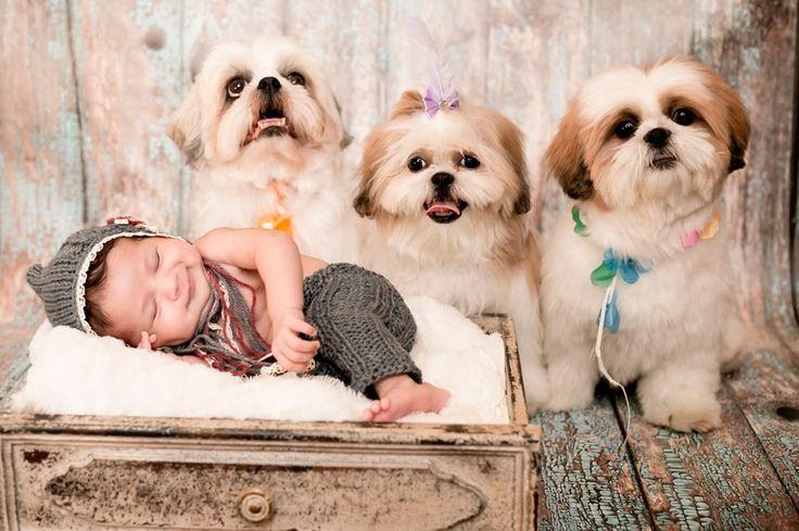 http://vejasp.abril.com.br/blogs/bichos/2014/09/bebes-cachorros-fotos-gravidas-ensaio/?utm_source=redesabril_vejasp&utm_medium=facebook&utm_campaign=vejasp