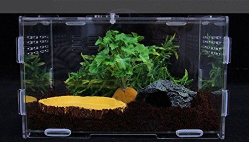 Promoting green environmental protection  Non toxicity and simple application process. The Terrarium can be used in high temperature and moisture circumstances for long term.   A perfect home for many...