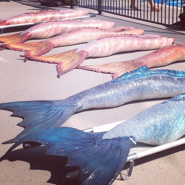 Mako Mermaids - the tails from the cast