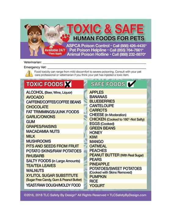 Poisonous Toxic And Safe Foods Trademarked Poison For Pets Dogs Cats Emergency Home Alone 5 X 7 Veterinarian Approved Fridge Safety Magnet Cat Emergency Pet Health Safe Food