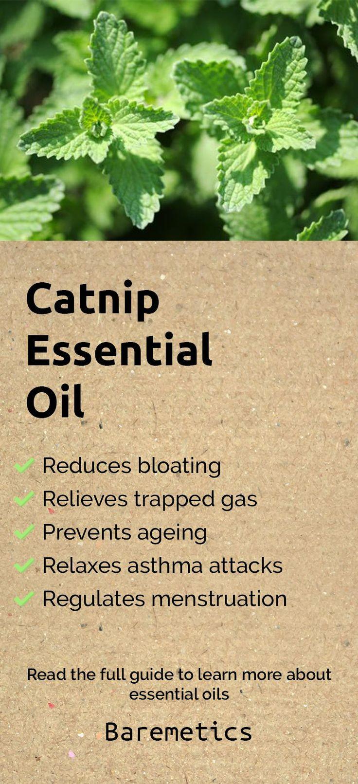 25 Unique Catnip Oil Ideas On Pinterest Homemade Cat