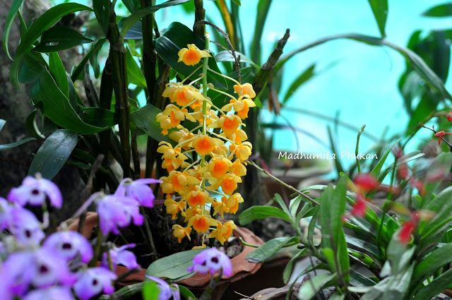 Mesmerizing, exotic Orchids at Kaziranga Orchid Garden