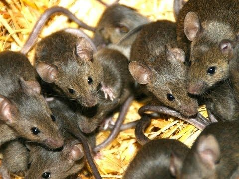 Fancy This Natural DIY Hack is the Best Way to Prevent House Mice