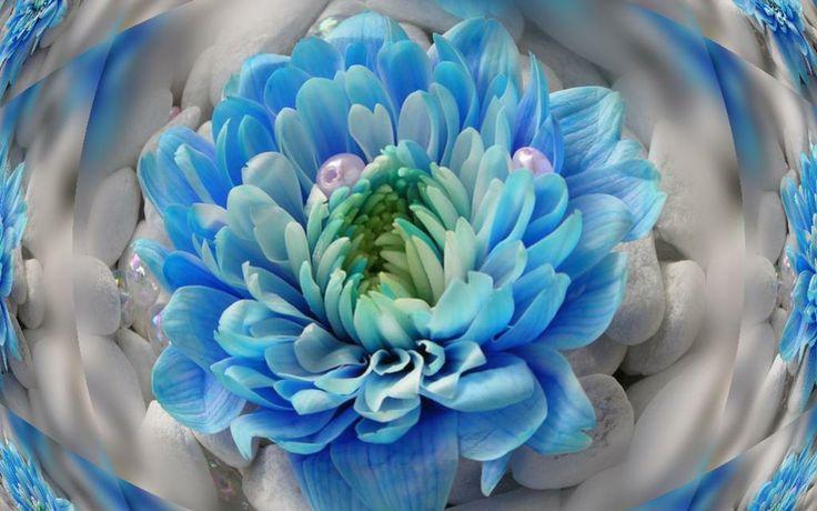 Ipad Wallpaper Little Plant In A Bubble: 17 Best Images About Fractals Artwork On Pinterest