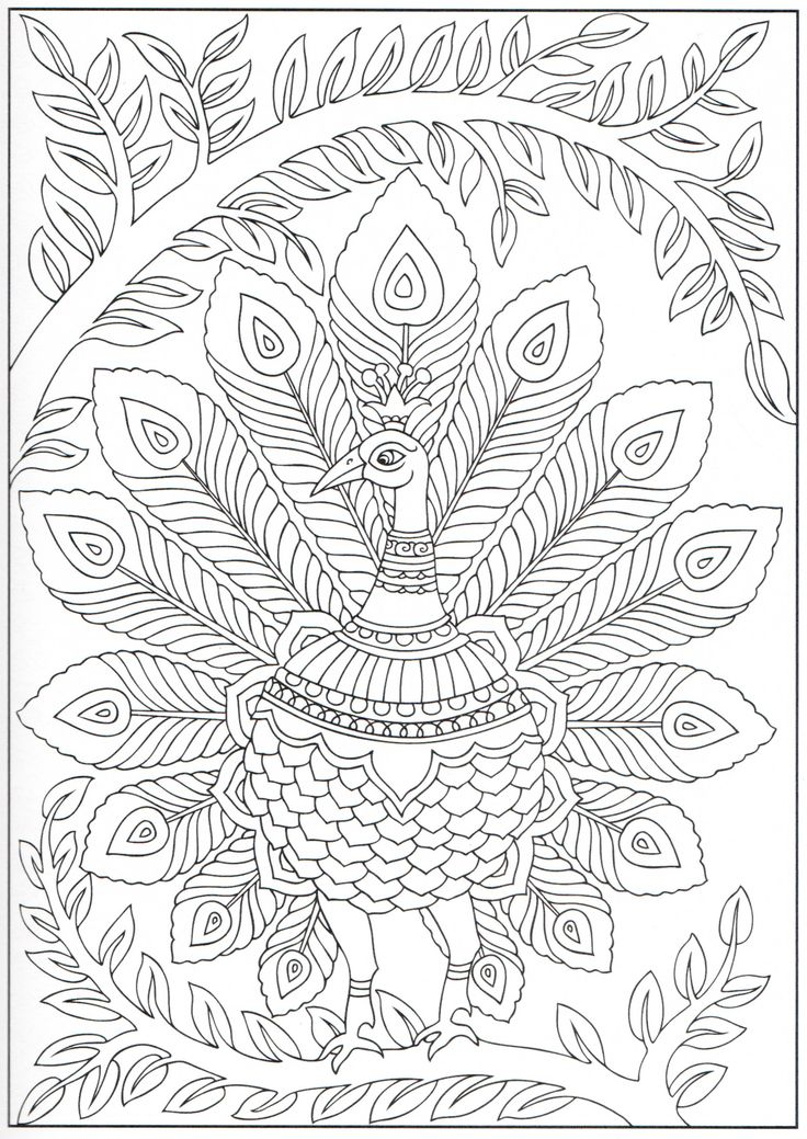 Peacock coloring page 12/31