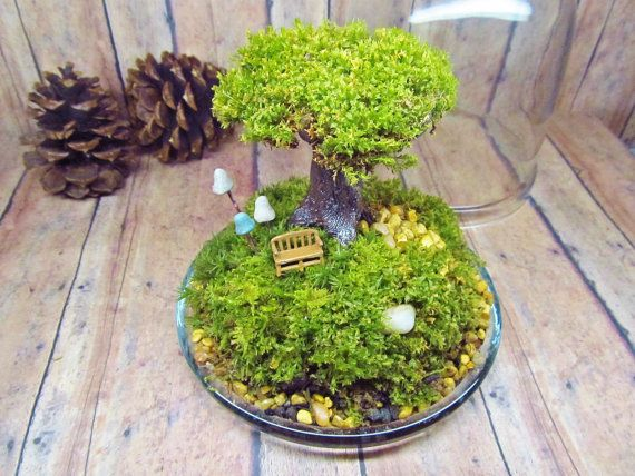 Baum des Lebens Live Moos Baum Terrarium Fairy Garden