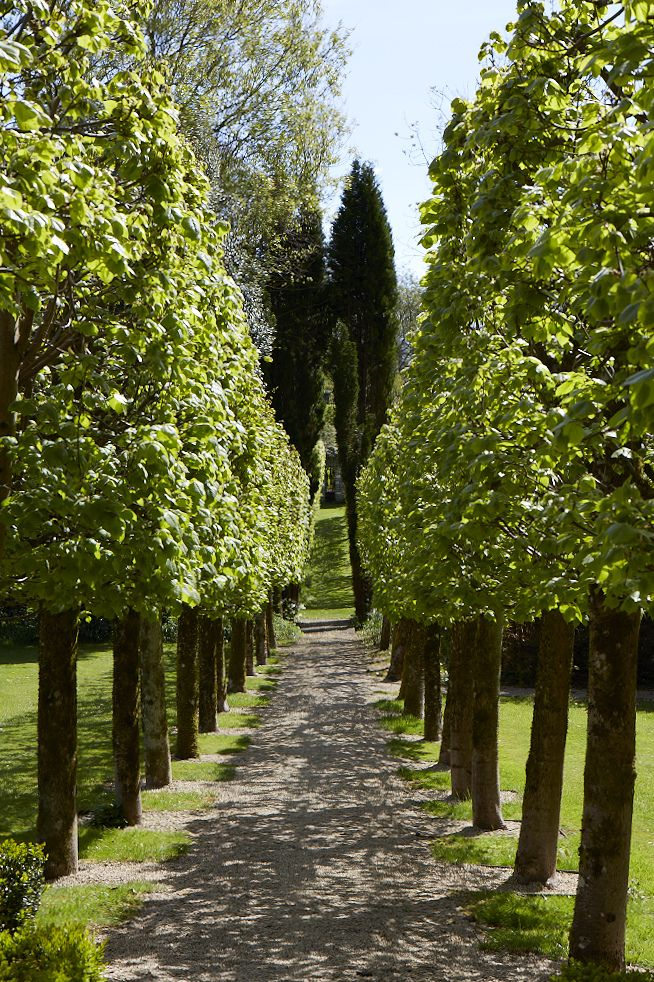 167 best images about pleached pollarded and espalier - What is lime used for in gardening ...