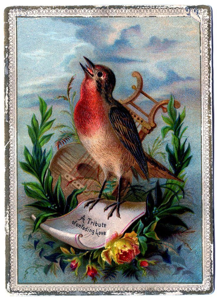 все открытки с птицы шин