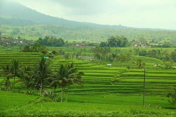 Semestinya Indonesia mampu berdaulat pangan andai saja pemerintah dan masyarakat bersinergi guna memajukan pertanian dan fokus pada kesejahteraan petani.