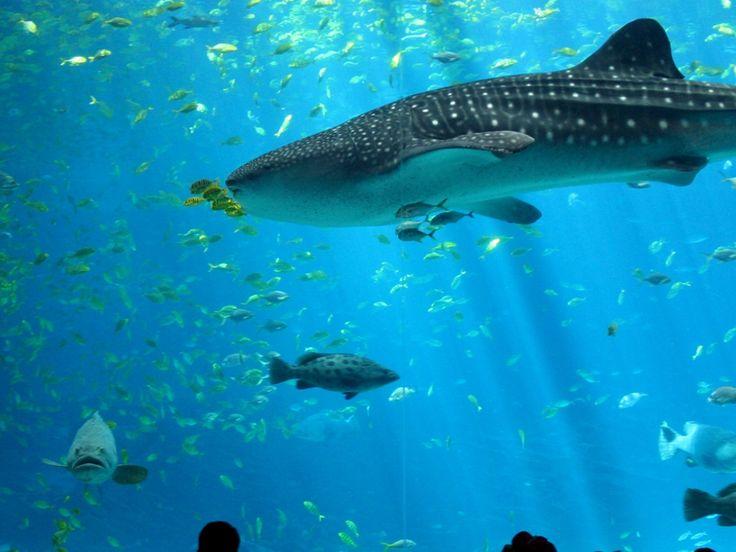 shark aquarium live wallpaper - photo #32