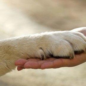 Sì dell'Aula della Camera dei deputati alle mozioni sulle iniziative per la tutela dei diritti degli animali nell'ambito del semestre italiano di presidenza Ue.