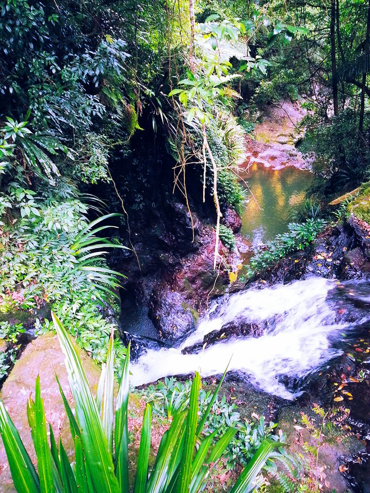 Elabana Falls Walk - Christmas 2013 #oreillysrainforestretreat #qld #goldcoast #rainforest #walkingtrails