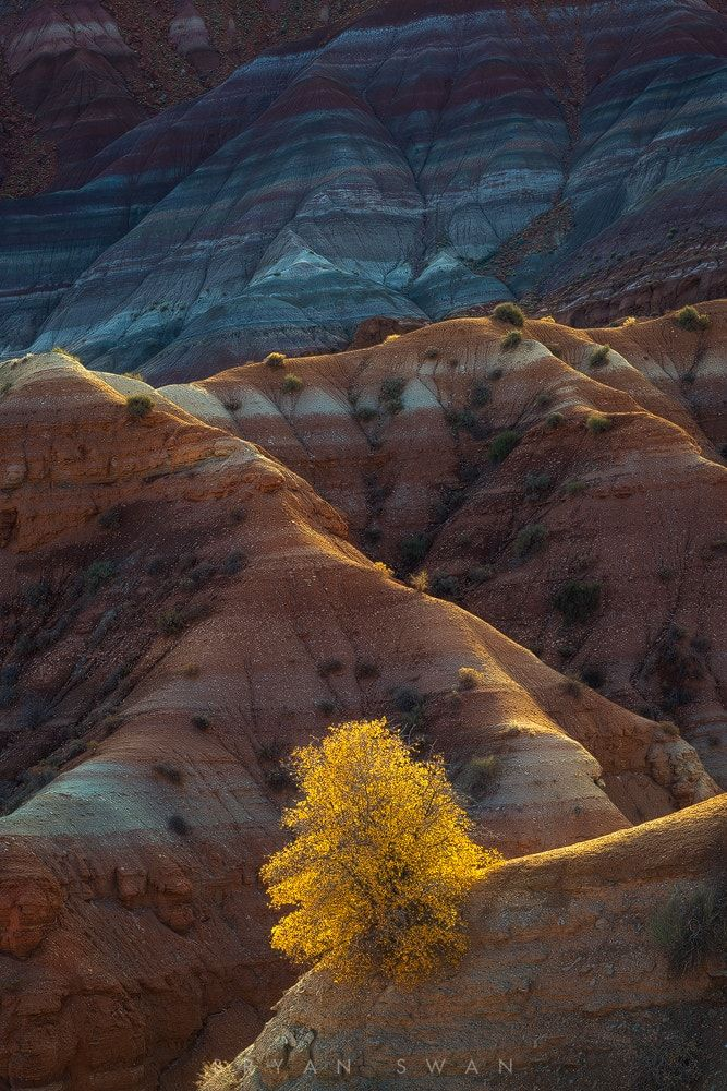 The Burning Bush - Didn't quite get the sunrise that I had hoped for this particular morning while overlooking some really fantastic badlands near Paria, but as the morning sun illuminated the ridges of this canyon and this bush in particular, this shot just spoke to me. Mainly about donuts.
