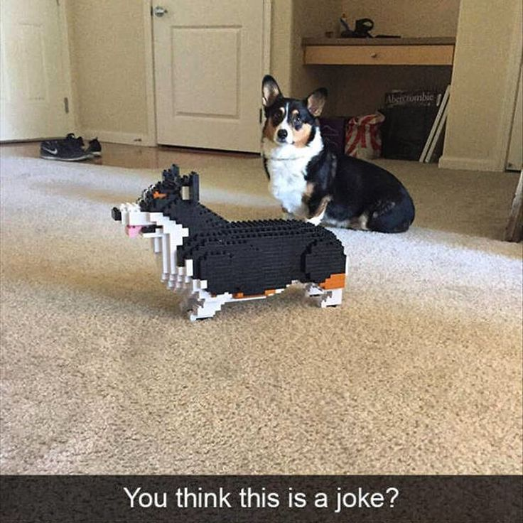 "2,726 gilla-markeringar, 22 kommentarer - Marco D. | My Brik Box (@mybrikbox) på Instagram: ""Adding some Lego humor in here . Comment if this is yours  #lego #corgi #afol #dogs #funnymemes"""