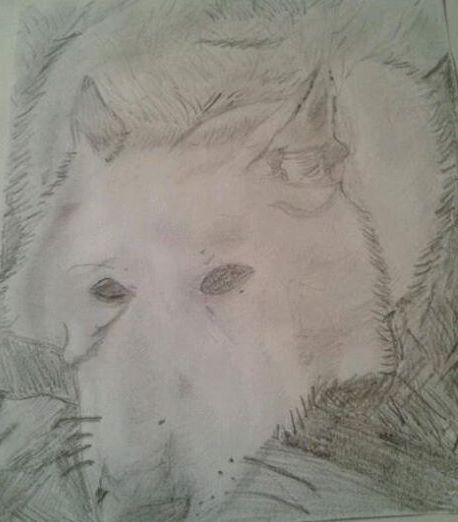 June 2014 - Drew my pet german shepherd Smokey :)