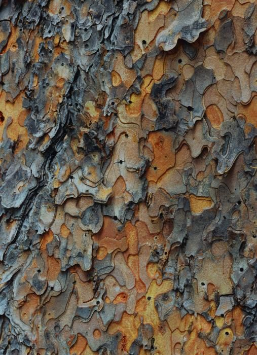 There were just a few trees with bark like this in parks nearby when I was a kid, and I absolutely adored them, so this picture makes me feel all fuzzily nostalgic