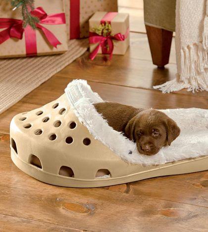 Crocs stapt in hondenbedden
